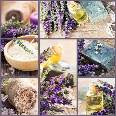 Fresh lavender collage